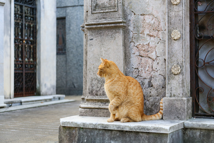 Recoleta Cat