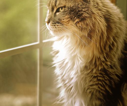 Surveying Her Kingdom