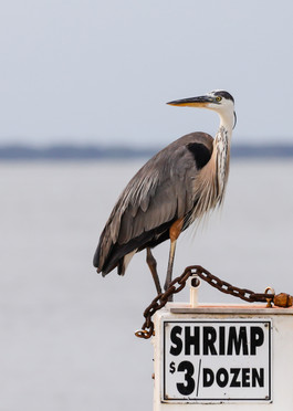 Where's the shrimp?
