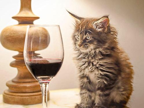 Kitten Meets Cabernet