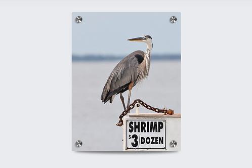 Where's the Shrimp? 24 x 30