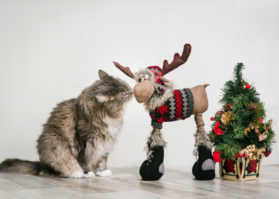 Merry Kiss Moose