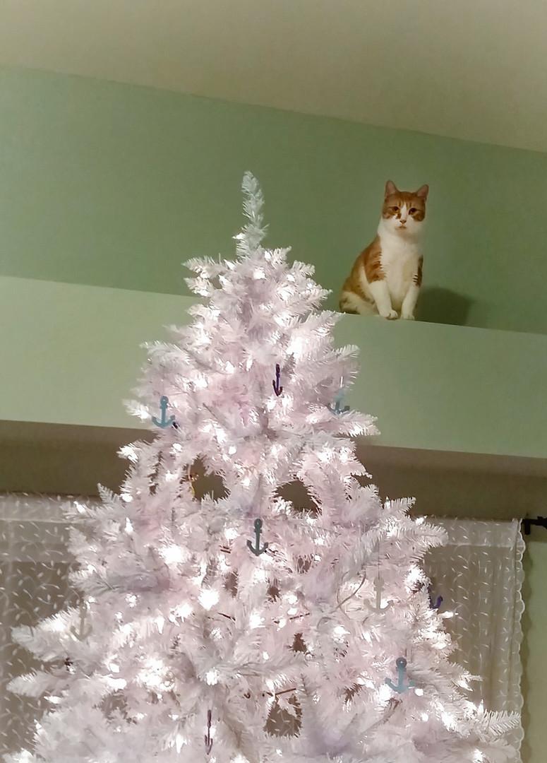 Simon Topples The Tree
