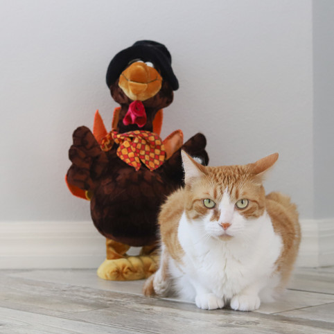 Simon and a Turkey