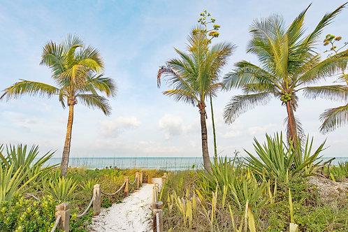 Captiva Palms