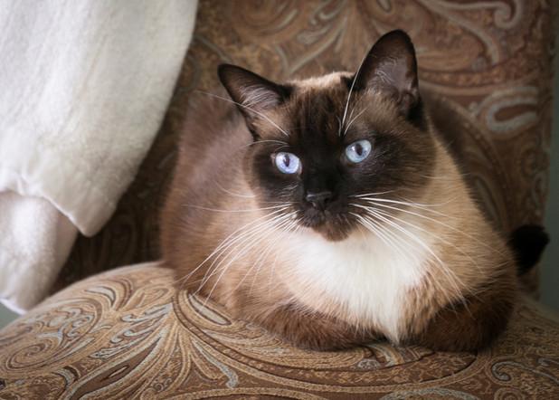 Blue-eyed JuneBug