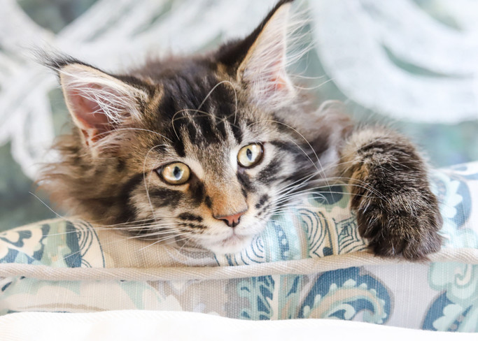 Pillow Cleo