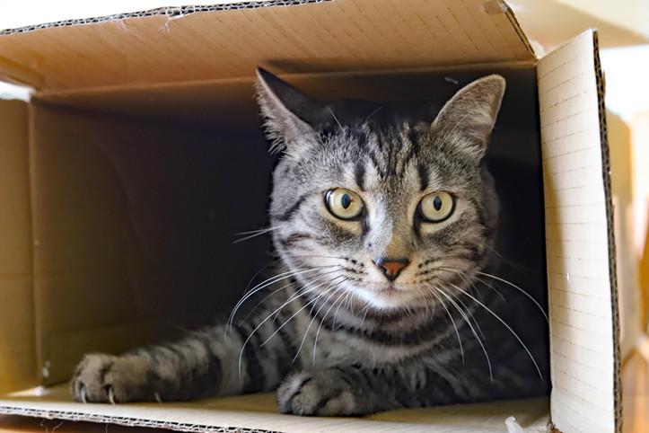 Binny in a Box