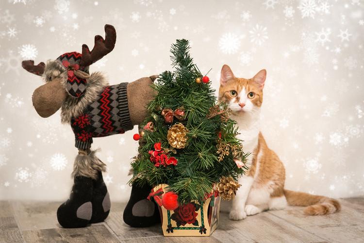 Christmas Tree Cat