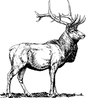 stag-147160_640.png