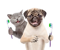 Happy kitten and pug puppy holding a too