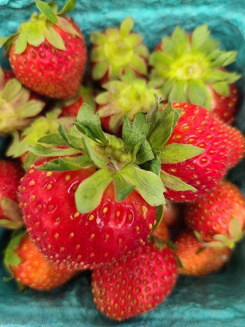 Organic strawberries- pint