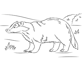 european-badger-coloring-pages.png