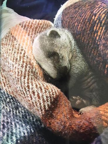 badger warm.jpg