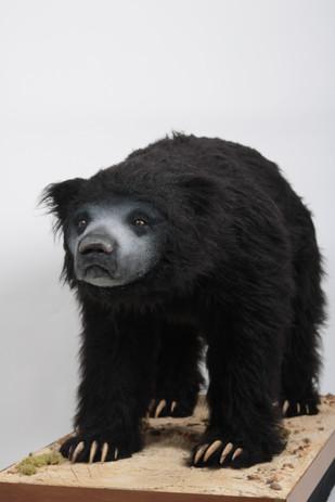 Animatronic Sloth Bear