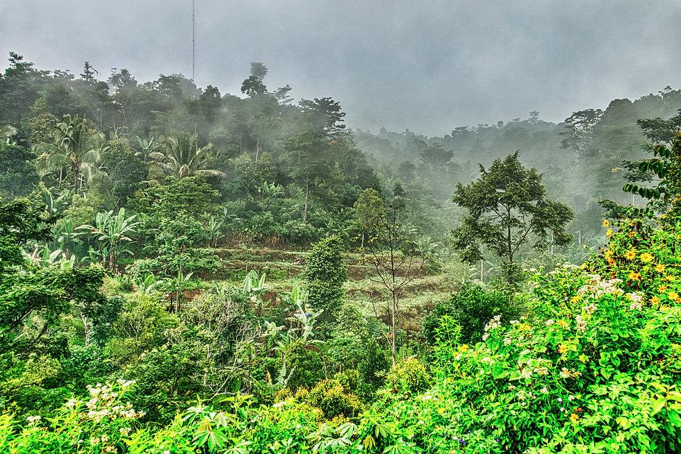 jungle forest.jpeg