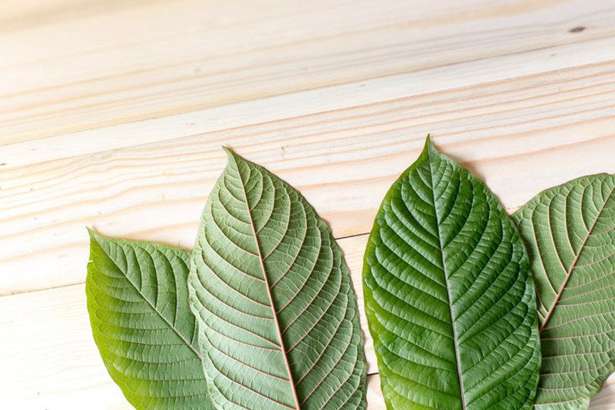 leaves on wood.jpeg