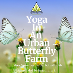 YogaInAn Urban Butterfly Farm.png