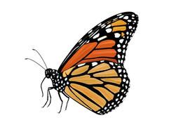 LBJWC_Monarchbutterfly-1024x768.jpg