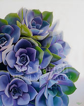 Succulent Beauty WS.jpg