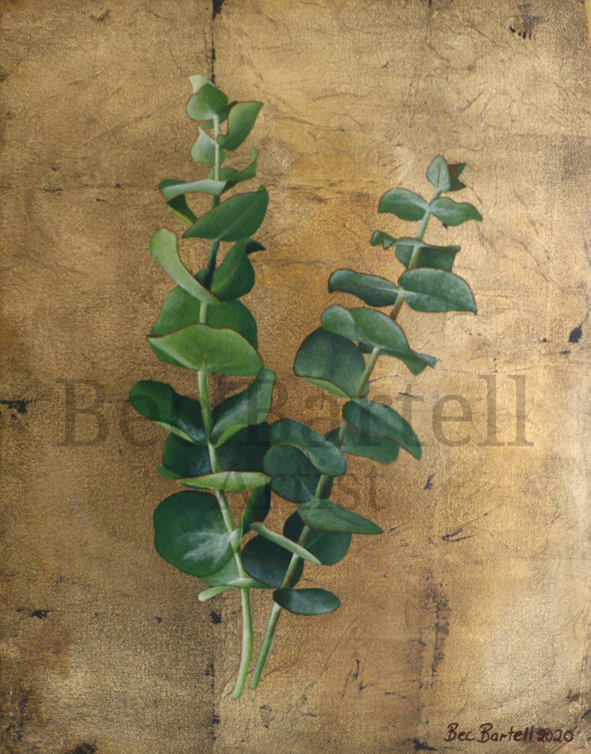 Eucalyptus Sprig No 1