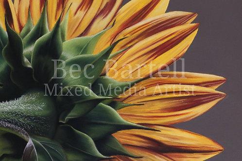 Sunflower No 1 Mini Poster Print