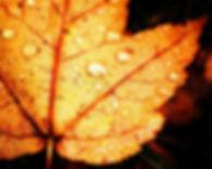 lush fall leaf .jpg