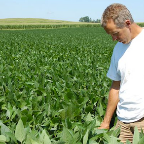 Washington Co. farmers leading the way in cover crops