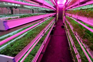 Vegetable Production Unit