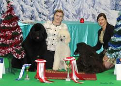 Narva dog show