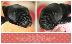 Puppies were born!