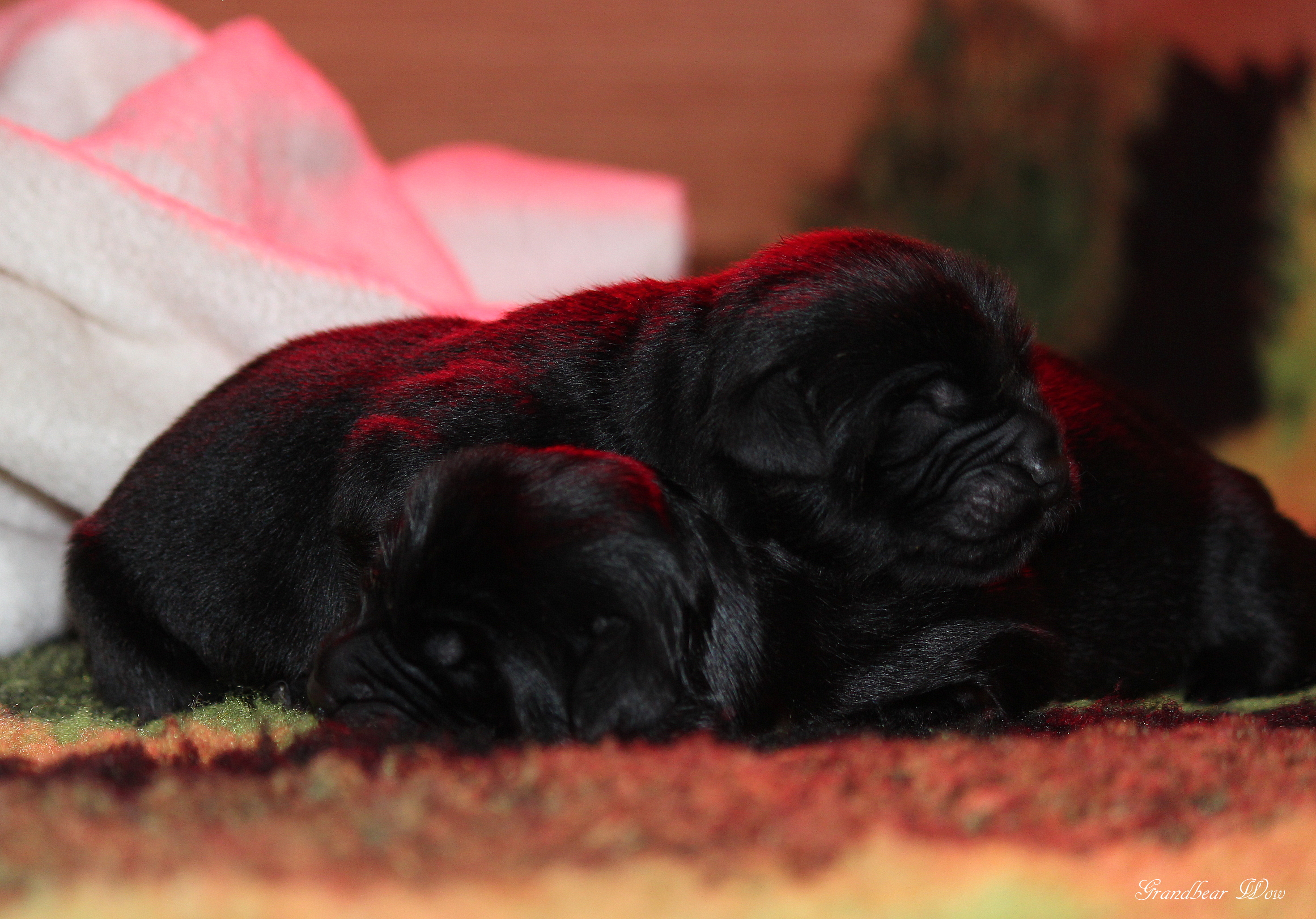 Puppies born on April 23