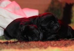 Puppies born on April 23