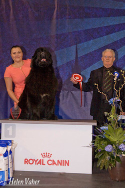 Tallinn Winner 2013