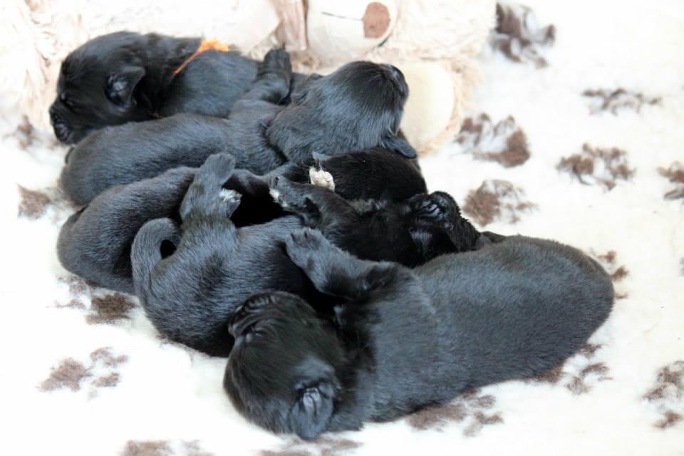 Latoya & Tango puppies born