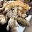 Thumbnail: Fox Northern Reds heavy fur slight damage