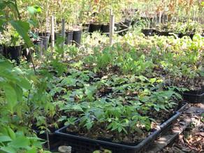 苗木の販売会、寄せ植え、竹ポット展示販売会のお知らせ