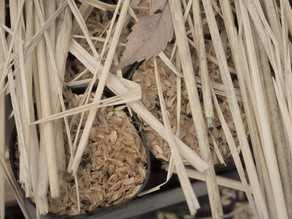 森になるポット苗…冬のケア