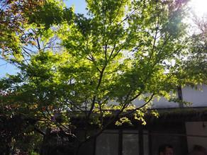 「芽吹きの季節」…ダーチャオープンデーの前に