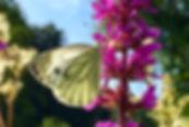 Schmetterling Impulse.jpg