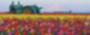 Screen Shot 2020-04-10 at 10.47.59 AM.pn