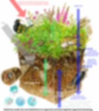 bodem biodiverse weide.jpg