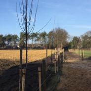 Aanplant bomen