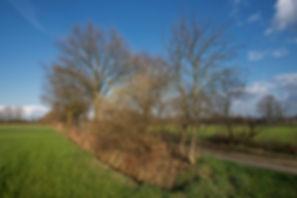 Houtkanten 03 (Kopie).jpg