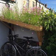 T2T wild flowers on bike shelter roof.jp