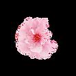 fleur rose .png