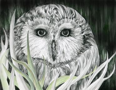monahan.owl.illustration.jpg