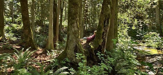 monahan.studio.forest..pic.jpg