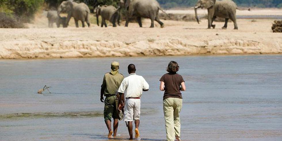Art Yoga and Safari Retreat Zambia, Africa