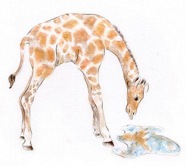 Monahan.Giraffe.reflection.jpg